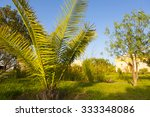 Shrubs And Fence With Palm Tre...