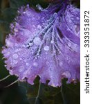 Purple Decorative Cabbage...