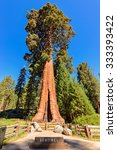 Giant sequoia tree Sentinel in Sequoia National Park, California - stock photo