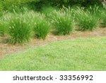ornamental grasses in a row... | Shutterstock . vector #33356992