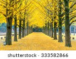 row of yellow ginkgo tree in... | Shutterstock . vector #333582866