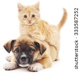 Stock photo red kitten and puppy isolated on a white background 333587252