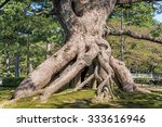View Of A Raised Roots Pine In...