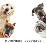 Stock photo dogs isolated on white 333646538