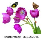 Fresh Purple Tulips With...