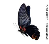Great Mormon  Papilio Memnon ...