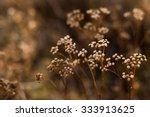 Wild Autumn Flowers Close Up