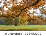 sunlighted orange autumn tree... | Shutterstock . vector #333953372