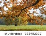 sunlighted orange autumn tree...   Shutterstock . vector #333953372