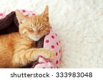 Stock photo a ginger kitten sleeps in his soft cozy bed on a white carpet soft focus 333983048
