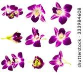 Set Purple Orchid Isolated  - Fine Art prints