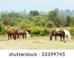 Beautiful Herd Of Multi Colore...