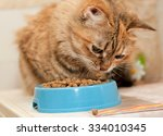 Tabby Cat Eats Dry Cat Food...