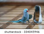 Blue Indian Ringneck Parakeet...
