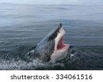 great white shark  carcharodon...   Shutterstock . vector #334061516