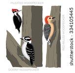 Bird Woodpecker Set Cartoon...