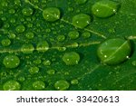 macro leave with water drops | Shutterstock . vector #33420613