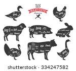 american  us  cuts of beef ... | Shutterstock .eps vector #334247582