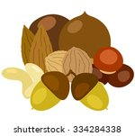 nut collection variety... | Shutterstock .eps vector #334284338