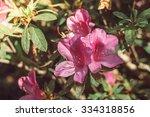 Spring Floral Background  ...
