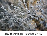 frost on dill | Shutterstock . vector #334388492