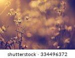 vintage photo of wild flowers... | Shutterstock . vector #334496372