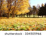 Beautiful Autumn Park. Autumn...