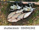 roach freshwater fish just... | Shutterstock . vector #334541342