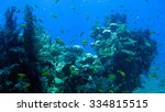 the coral reef scuba diving | Shutterstock . vector #334815515