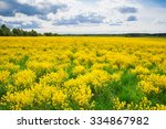 Field With Yellow Flowers