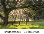 Large Oak Tree Branch With Far...