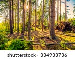 Sun In Ancient Forest. Image I...