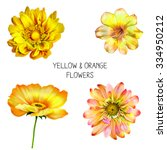 Illustration Of Yellow Poppy...