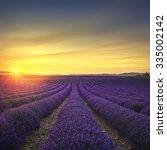 lavender flower blooming... | Shutterstock . vector #335002142