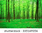 beautiful forest landscape in... | Shutterstock . vector #335169356