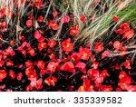 red flowers geranium with... | Shutterstock . vector #335339582