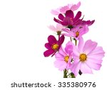 Cosmos Flowers Isolated On A...