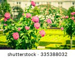 Stock photo bush of beautiful pink roses in a garden filtered shot 335388032