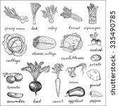 vegetables. hand drawn vintage... | Shutterstock . vector #335490785