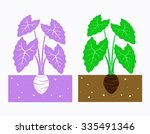 taro plant with leaves and tuber | Shutterstock .eps vector #335491346
