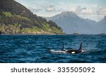 Majestic Orca Whales In The...