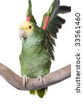 Small photo of Amazon Yellow Head; Amazona oratrix; Mexico, Central America; isolated on white