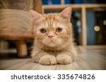 Stock photo cat in the cafe 335674826