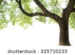 Stock photo tall trees isolated on white background 335710235