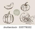 pumpkin  hand draw sketch ... | Shutterstock .eps vector #335778332