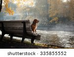 Dog Breed Beagle Walking In...