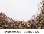 dying leaf on white concrete... | Shutterstock . vector #335892122