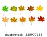 10 best beautiful maples of... | Shutterstock . vector #335977355