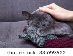 Stock photo cat is relaxing on the sofa 335998922