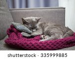 Stock photo cat is relaxing on the sofa 335999885